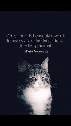 Kindness Pet Animal Islam Prophet Muhammad SAW Islamic Quotes, Muslim Quotes, Islamic Inspirational Quotes, Religious Quotes, Islamic Messages, Religious Art, Islamic Art, Islam Quran, Allah Islam