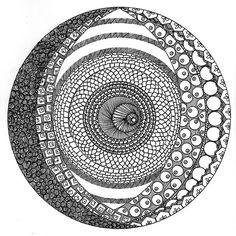 zentangle circles | Recent Photos The Commons Getty Collection Galleries World Map App ...