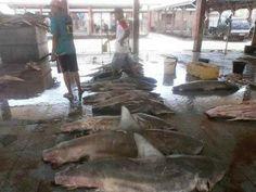 Pasar ikan Tanjung luar
