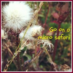 Wanna turn a routine walk around the neighborhood with kids into an adventure. How? Go on a Micro Safari!