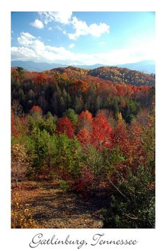We are enjoying the last of the fall colors in the Smoky Mountains