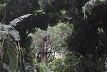best zip line nicaragua  pictures share it