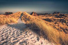 Dünenpfad (Henne Strand), Dänemark, Dünen, Küste, Nordsee, Strand, Jütland