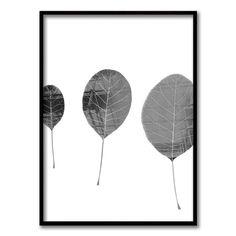 Urban Leaves I