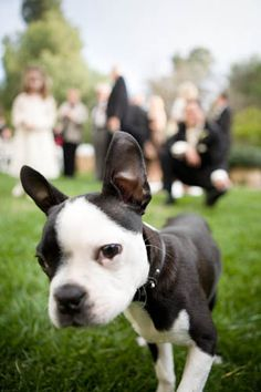 photography; would be fun to have fotos of the doggies separately at the wedding, like their own foto shoot (^_^)