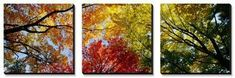 Colorful Trees in Fall, Autumn, Low Angle View Canvas Art Set by Panoramic Images at Art.com