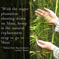 Hemp could be Maui's first sustainable cash crop. Sign the petition to support hemp on Maui!