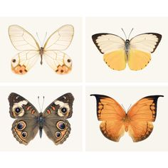 Butterfly Wall Art Set, Fine Art Photography Print Set, Orange, Brown,... ($40) ❤ liked on Polyvore featuring home, home decor, wall art, butterfly wall art, butterfly home decor, orange home decor, yellow home decor and photo-print