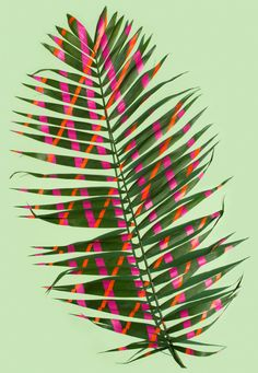 Using leaves from the botanical gardens, tapes and stickers from the local stationary shop and the bright mid-summer sunlight Sarah Illenberger created twelve images which show a collaboration with nature.