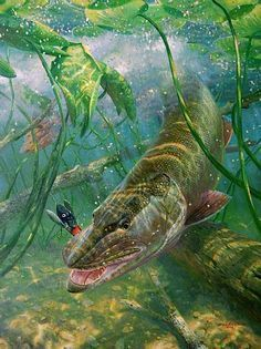 Rising to the Fly - Brown Trout; Original Painting by Mark Susinno . Best Fishing Kayak, Pike Fishing, Trout Fishing, Bass Fishing, Fishing Stuff, Fishing Shirts, Fish Artwork, Fish Wallpaper, Fishing Photography