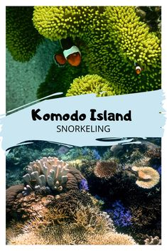 Komodo National Park is not just about the dragons. Snorkeling in Komodo affords the opportunity to see manta rays, turtles, tropical fish and coral. Big Island Hawaii, Love Island, Komodo National Park, National Parks, Beautiful Islands, Beautiful Beaches, Cave Diving, Scuba Diving, Giant Sea Turtle