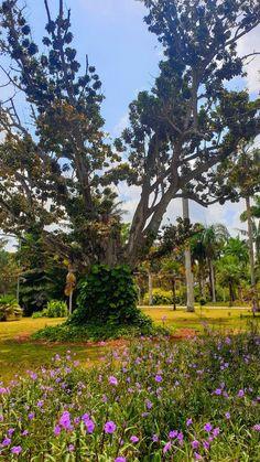 Jardim Botânico Nacional de Cuba, Havana © Viaje Comigo Cuba, Fidel Castro, Tropical, Havana, Plants, Travel, Tropical Plants, Japan Garden, Nature
