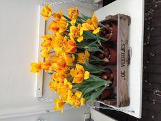 Amsterdam tulip museum Amsterdam Tulips, Museum, Vegetables, Flowers, Plants, Travel, Viajes, Vegetable Recipes, Destinations