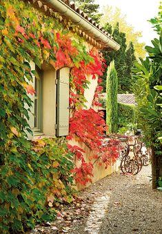 Jardín provenzal