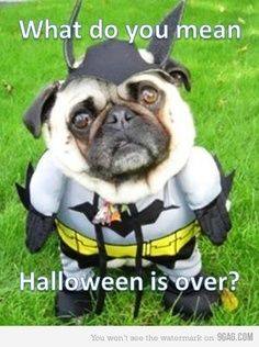 Get your pet products for up to 50% off at Petmountain.com!!! #Petm Dog meme I Funny animal meme I cheap pet products I pugs I halloween pug