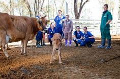 UQ's Dayboro Veterinary Surgery facilities will continue the tradition that began in 1987, to provide a high-quality level of veterinary service to clients and to allow UQ Veterinary School students to develop their skills and integrate the knowledge required to practice as veterinarians.
