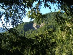 Overnight tree climbing excursions Oregon