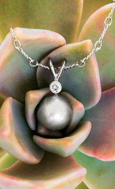 This beautiful Tahitian cultured pearl pendant hangs from a delicate cable chain. Each eco-friendly pearl has a rich bright luster, and shimmers with a spectrum of iridescent overtones.