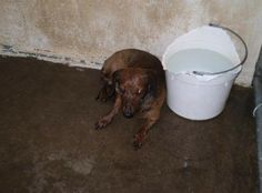 *RESCUE ONLY* OZZY HAS ONLY 42 SHARES!!!** OZZY -Dachshund Mason County Animal Shelter Pt Pleasant, WV Date Posted:5/8 Age: 10YRS, male,10LBS. Personality: Good with other dogs and cats.  http://www.petfinder.com/petdetail/29170245/ Mason County Animal Shelter 1965 Fairground Road Point Pleasant, WV 25550 304-675-6458 mcasneville@peoplepc.com.com **FB link: https://www.facebook.com/photo.php?fbid=766088060098834&set=a.627659993941642.1073741828.627614193946222&type=1&theater