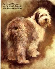 Dogs by Rien Poortvliet Abrams Publ.Inc 1983 page 63 (Old English Sheepdog)