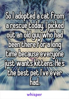 So I adopted a cat from a rescue today. I picked out an old guy who had been there for a long time because everyone just wants kittens. He's the best pet I've ever had.