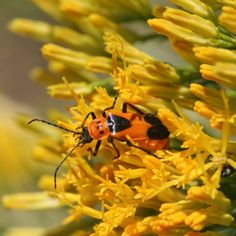 top 10 beneficial insects for the garden, even though they creep me out!