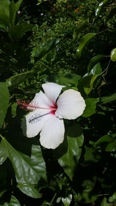 Cyprus Flower Cyprus Holiday, Flowers, Plants, Plant, Royal Icing Flowers, Flower, Florals, Floral, Planets