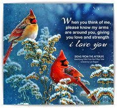 The first time a cardinal came to the bird feeder this year was on the anniversary of your death Pretty Birds, Beautiful Birds, Beautiful Pictures, Messages From Heaven, Grief Poems, I Love You Signs, Miss My Mom, Cardinal Birds, Cardinal Meaning