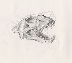 Lion skull by The Loud 1, via Flickr