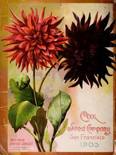 1903 Cox Seed annual, back cover