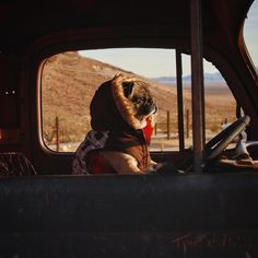 Mack the Adventure P Pet Dogs, Dogs And Puppies, Dog Cat, Doggies, Dog Birthday, Pug Love, Funny Dogs, Pugs, 7 Hours
