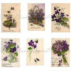 eternal love-violets