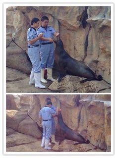 海獅刷牙 Ocean Park