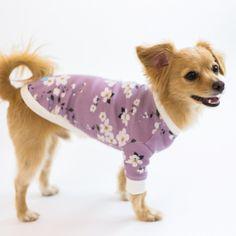 Sakura Sakura, Shiba Inu, Poodle, Chihuahua, Size Chart, Tea Cups, Products, Blue Dog, Poodles