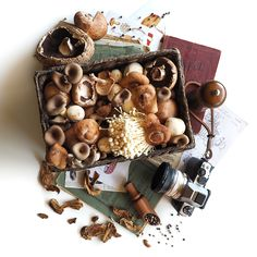 © Aidan Sartin Conte The Mushroom Box • Portabella • Enoki • Shiitake • Black Oyster • Button • Dried Porcini • Peppercorn Blend