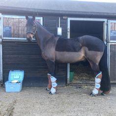 Ready to travel - Leo off to RAF Halton
