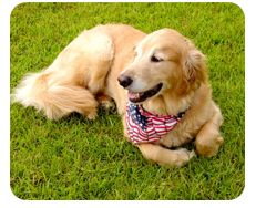 Fourth of July Safety Tips from @ASPCA