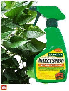 Keep your houseplants happy by removing destructive insects.