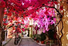 11 Stunning Streets Across The World : TripHobo Travel Blog