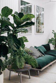 Can't help but relax on a green couch with those gorgeous leaves hanging over.