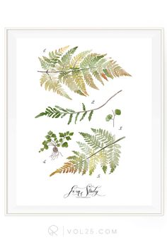 Fern Study vol2   Haven Collection   Textured Cotton Canvas Art Print in 4 Sizes   VOL25