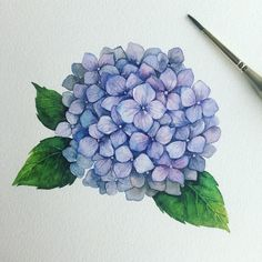 Watercolor Clouds, Watercolor Flowers, Watercolor Paintings, Illustration Blume, Botanical Illustration, Botanical Drawings, Botanical Art, Art Floral, Hydrangea Flower Pictures