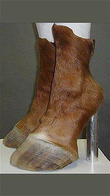 Hoof shoes. Just no.