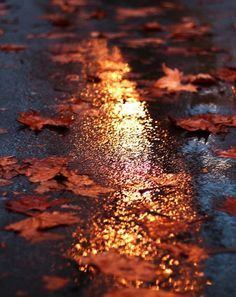 fall leaves AT NIGHT - Google Search