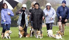 Wellington Beagle Club - Over 20 Beagles and Owners. What a sight!
