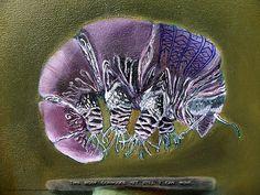 Symbiosis: Tardigrade by Glendon Mellow. Tardigrades are just so darned cute.
