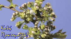 Aurora, Plants, Lisa, Art, Art Background, Flora, Kunst, Gcse Art, Plant