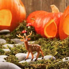 Someone found a tiny pumpkin village  #deer #crafts #christmas #adorable #gift #cute #love #instagood #happy #selfie #fun #tiny #fairygarden #fall #halloween