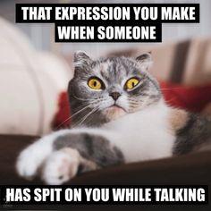 Cat Jokes, Funny Animal Jokes, Grumpy Cat Humor, Animal Humor, Funny Cat Videos, Cute Funny Animals, Animal Memes, Cute Cats, Funny Cats
