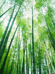 FTC cracks down on bamboo greenwashing